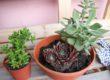 Balkondeko mit Sukkulenten – Sukkulenten einpflanzen