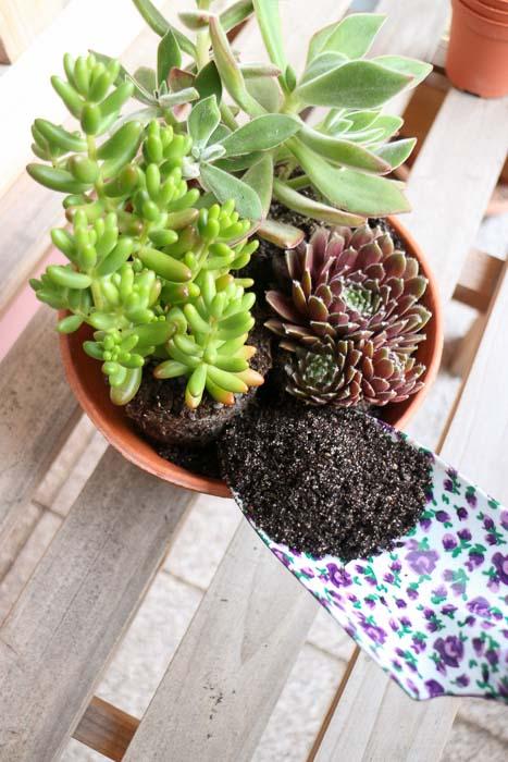 sukkulenten einpflanzen